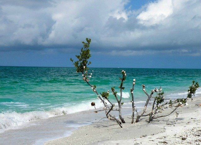 Marco Island Beaches - Tigertail Shell Tree