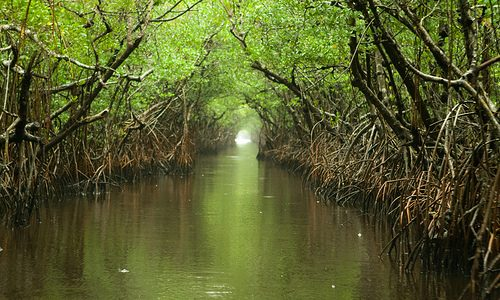 A Recommended Day Trip to Everglades National Park