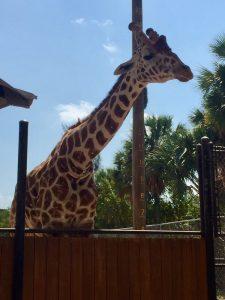 Naples_Zoo