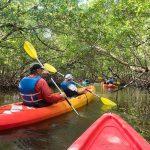 Kayaking the Glades