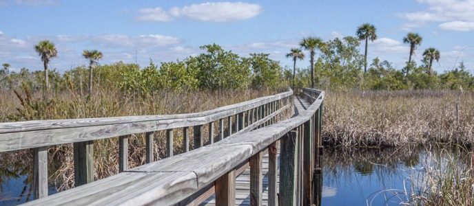 Boardwalk and Nature Trails close to Marco Island