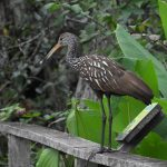 Corkscrew Bird Sanctuary