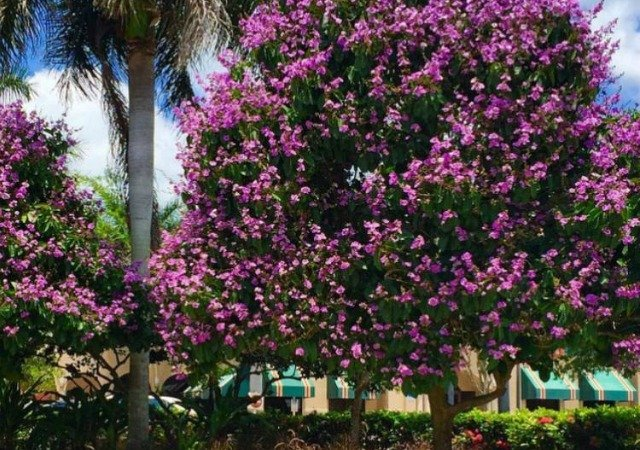Marco Island Spring Landscaping