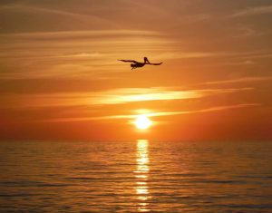 Bird at Sunset Marco Island